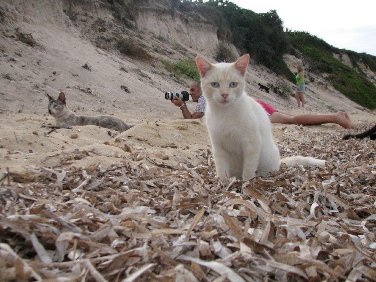 gatti-fotografati