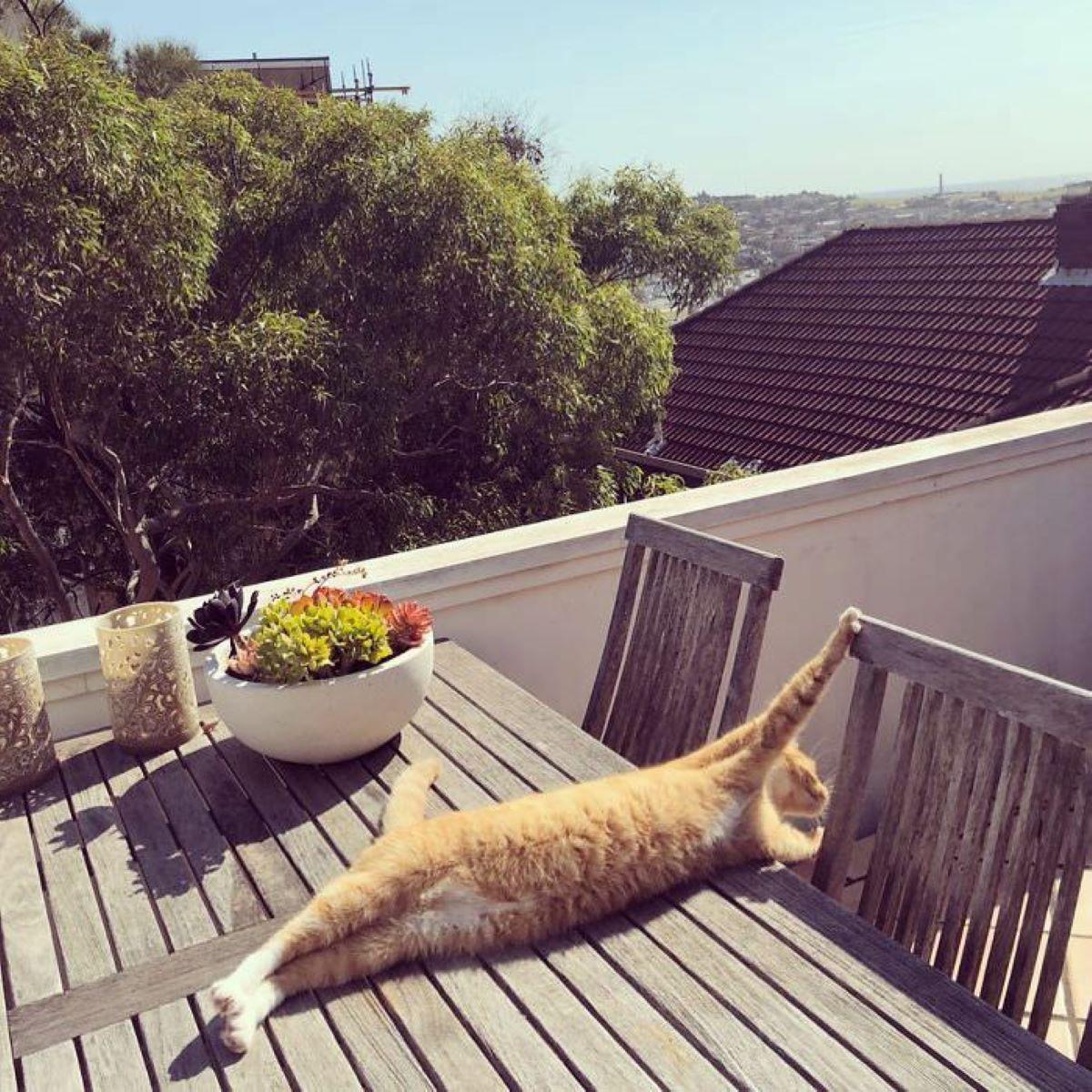 gatto-che-fa-stretching