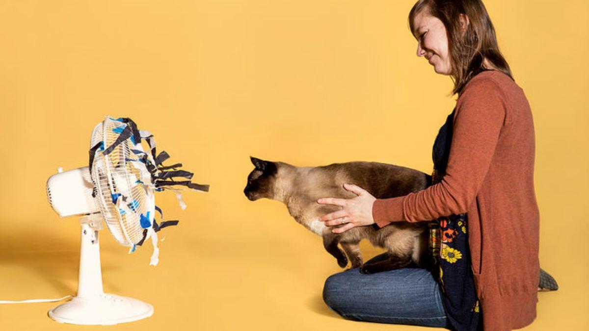 gatto-con-ventilatore