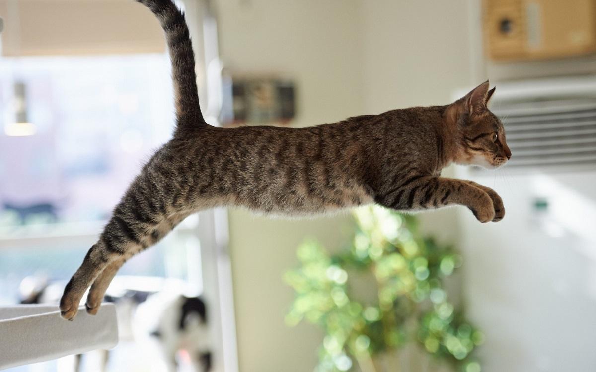 gatto che salta
