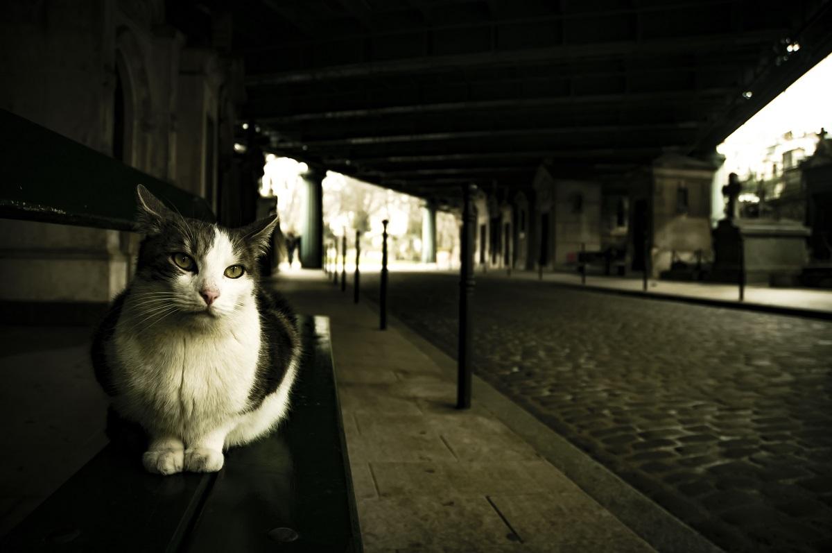 gatto vicino a cimitero