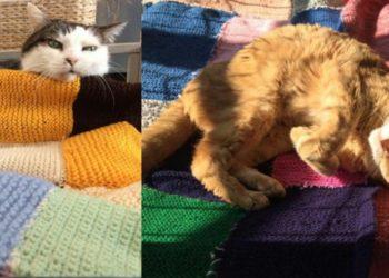i-gatti-ospiti-del-gattile-di-Monza-ricevono-coperte-dalle-ospiti-di-una-casa-di-riposo