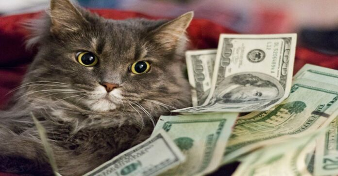 i-gatti-ospiti-del-rifugio-di-San-Lazzaro-erediteranno-500000-euro