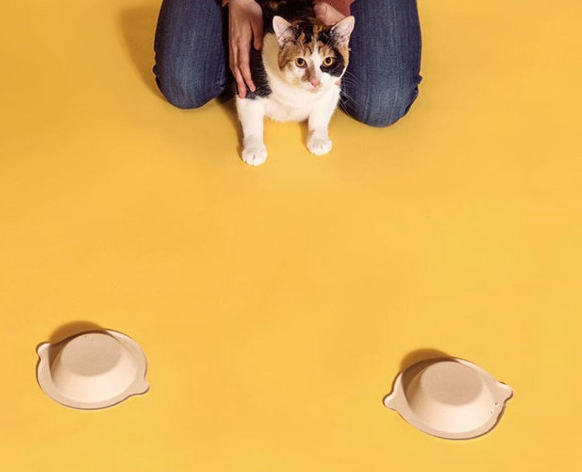 gatto-con-ciotole