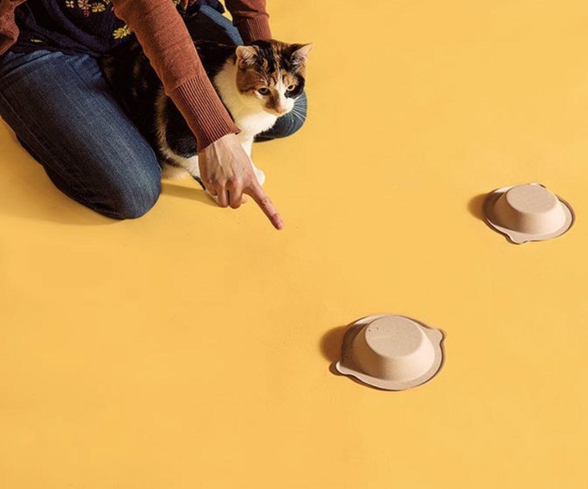 gatto-segue-il-dito