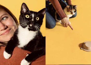 gatti-che-fanno-esperimenti