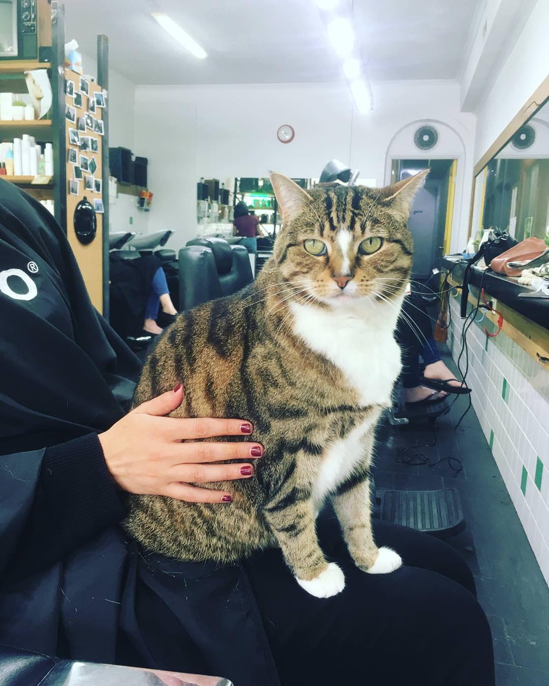 gatto-in-bracio-al-cliente