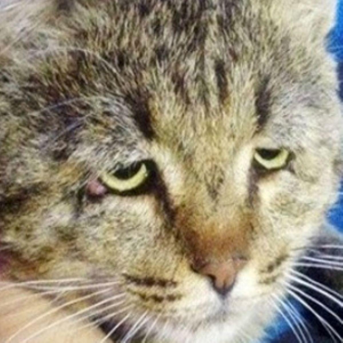 gatto-con-sguardo-triste