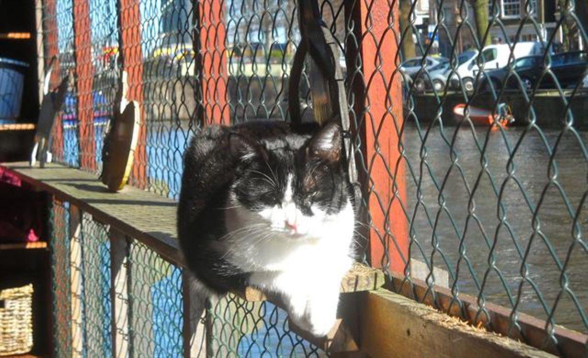 gatto-vicino-a-rete