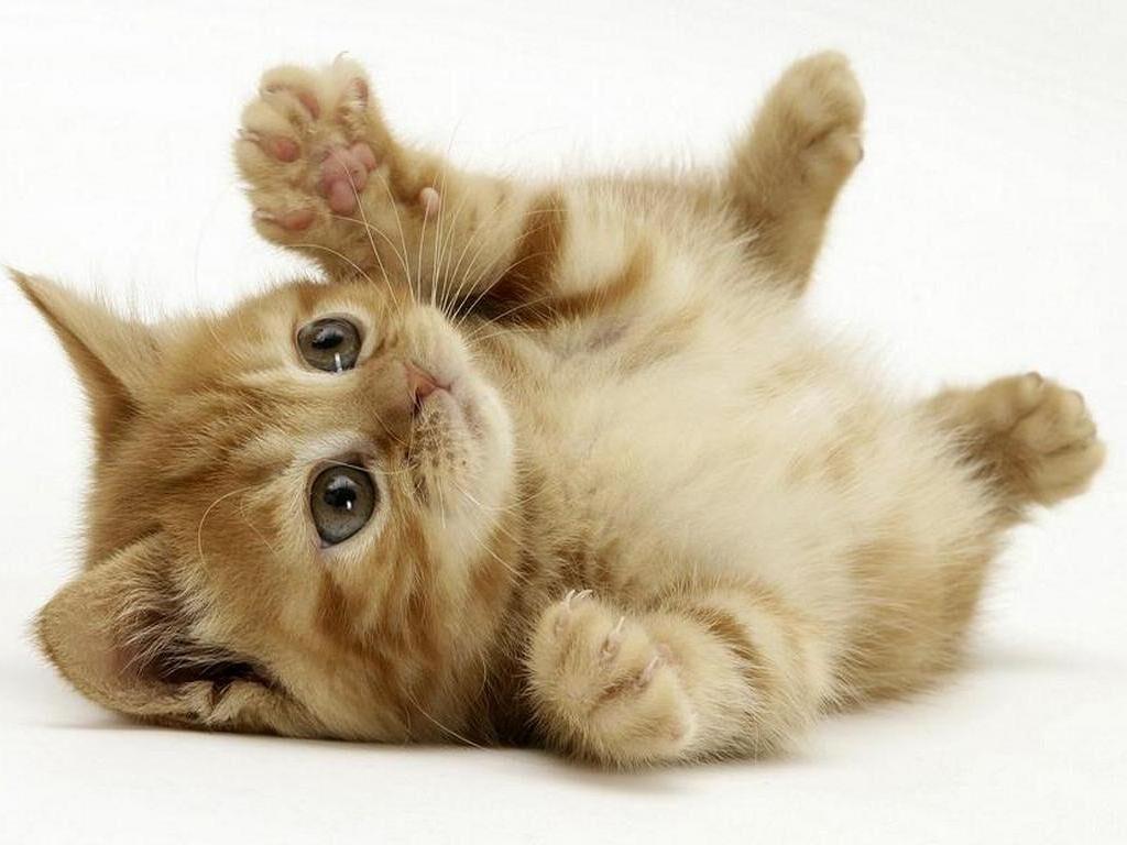 Perché- gatti- si- rotolano
