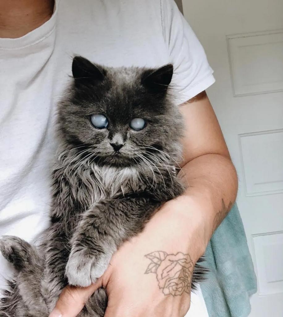 gatto cieco in braccio