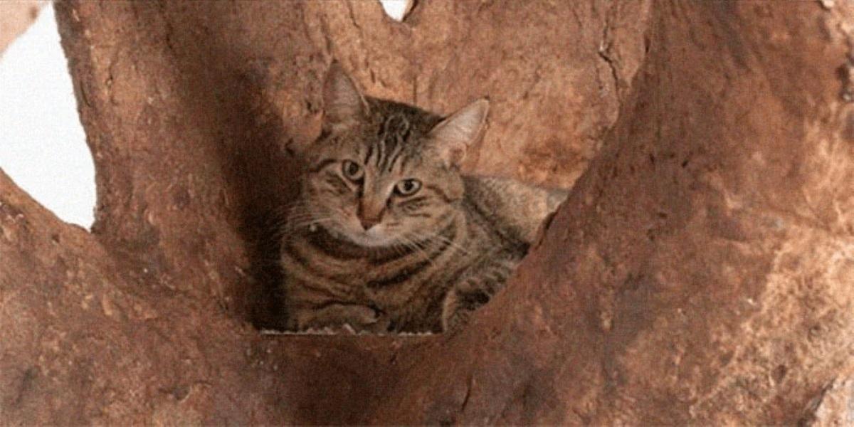 gatto-su-albero