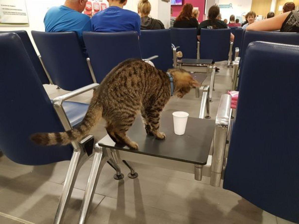gatto-a-conferenza