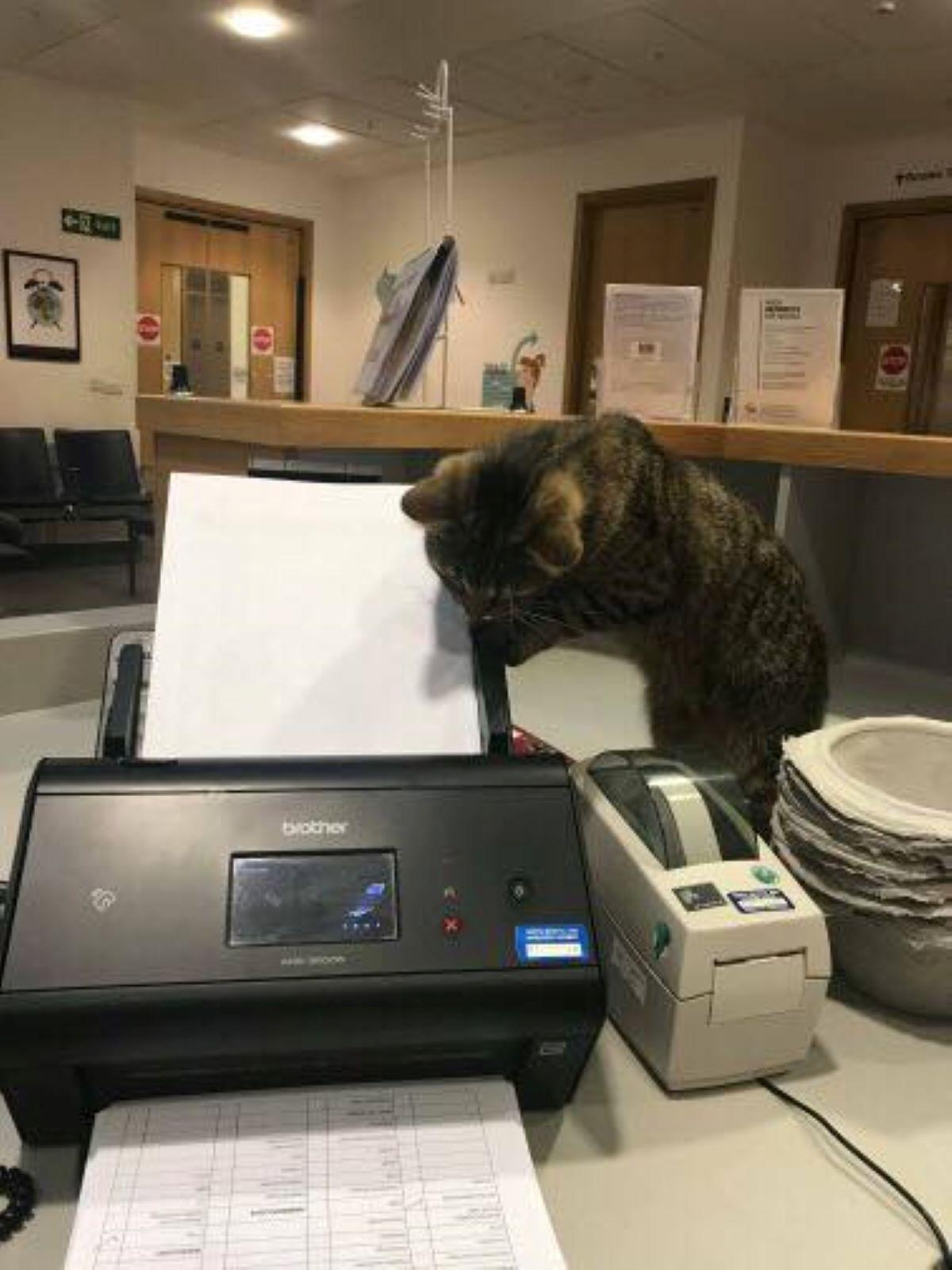 gatto-con-stampante
