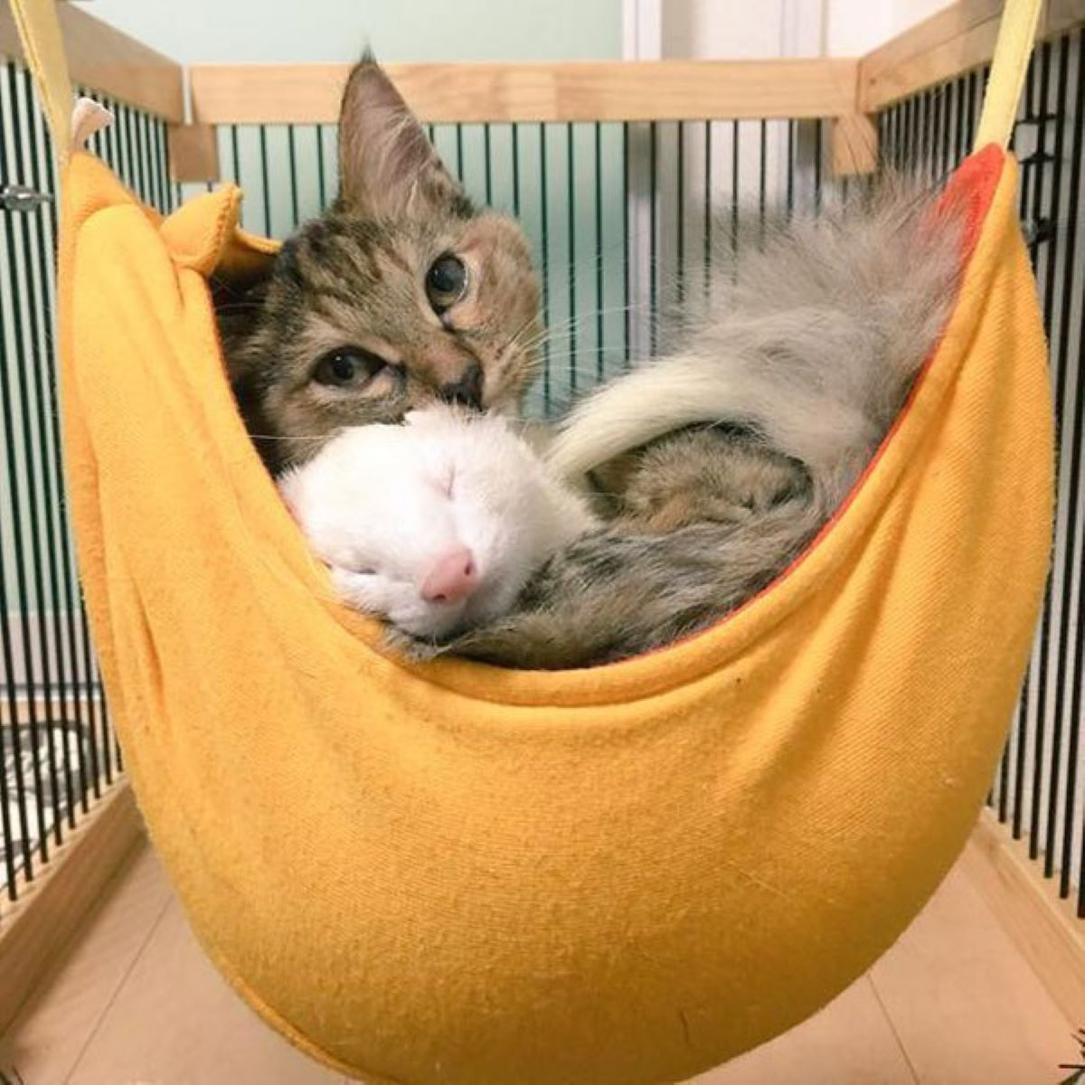 gatto-vicino-a-furetto