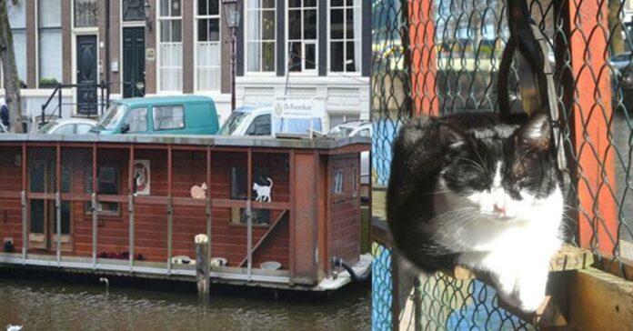 barca-con-gatti