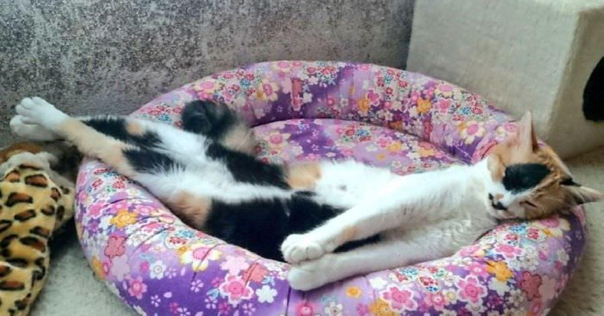 gatto-che-dorme-sul-cuscino