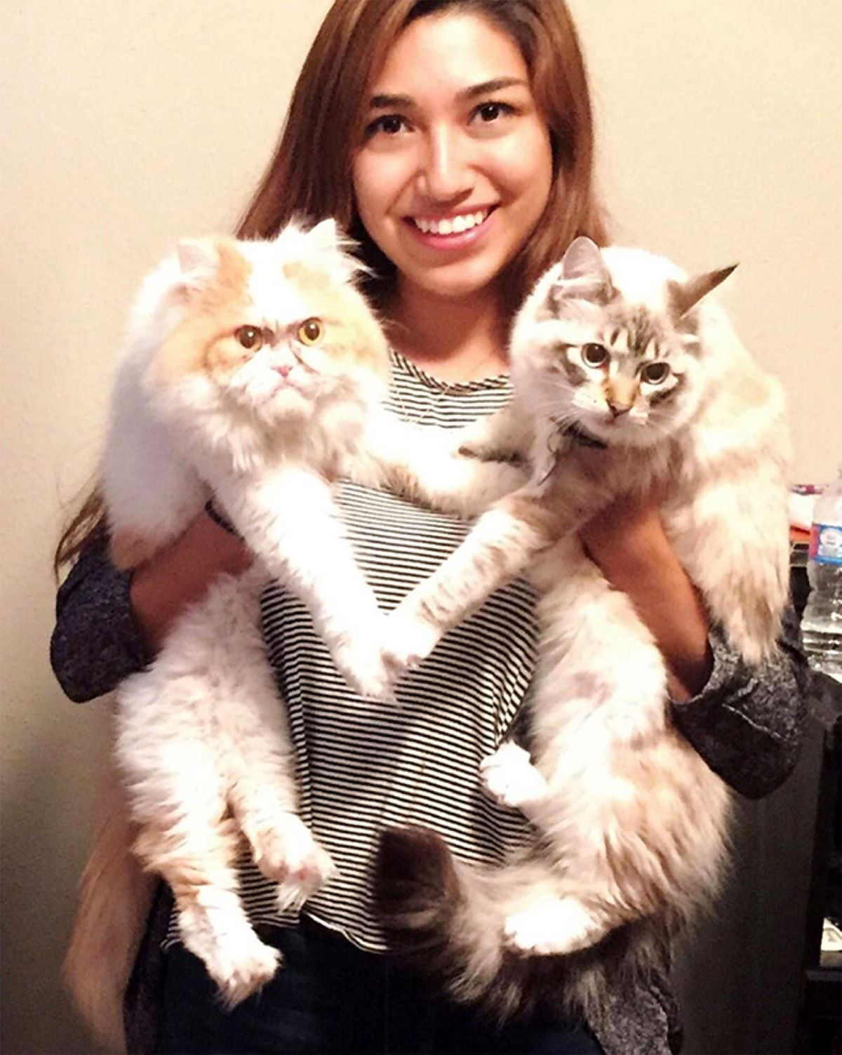 due-gatti-in-braccio