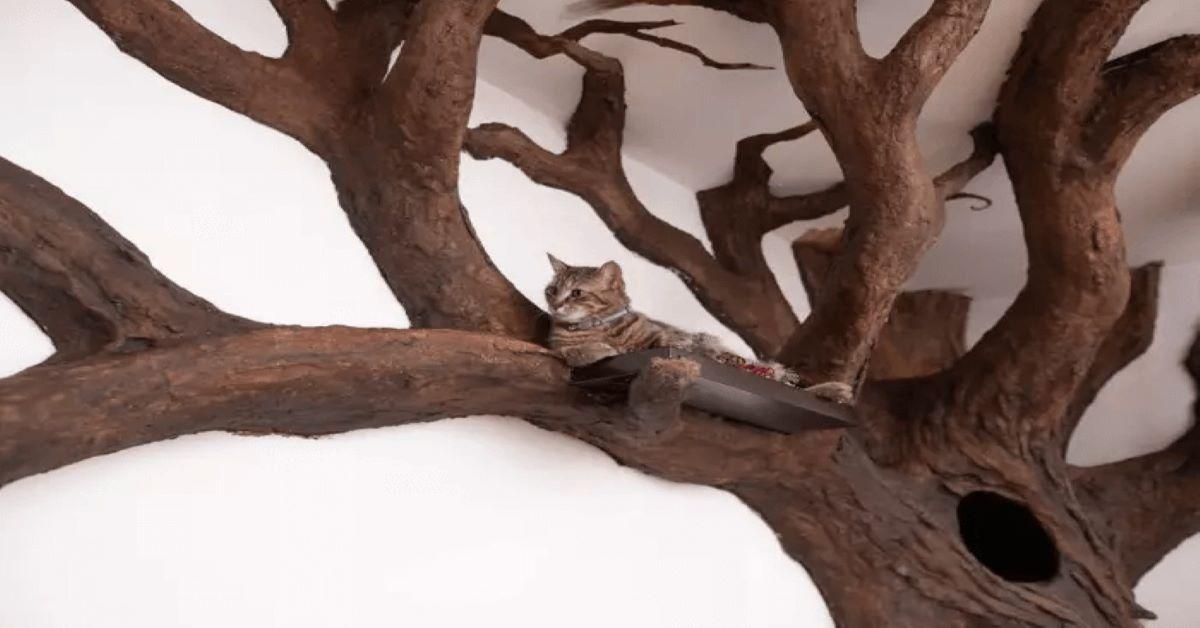 l'uomo-che-costruisce-alberi-su-misura-per-gatti