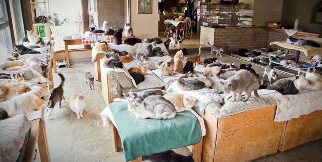 tanti gatti in sala