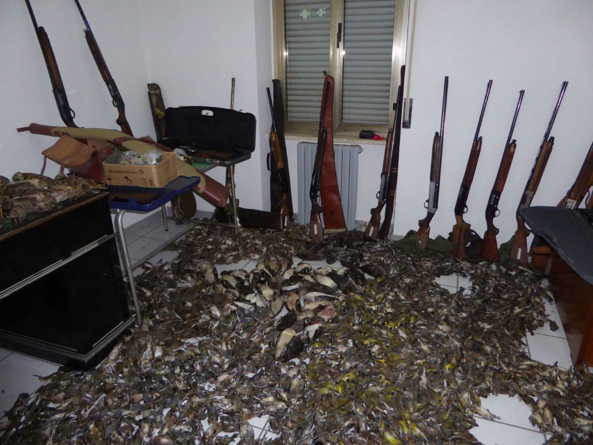 armi-e-uccelli-morti