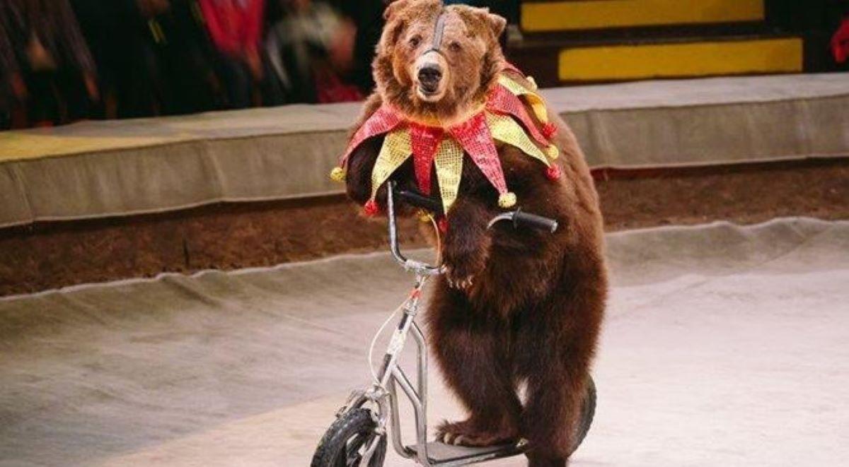 orso-su-bicicletta