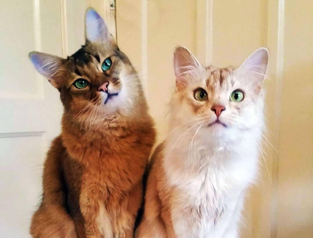due gatti guardano incantati
