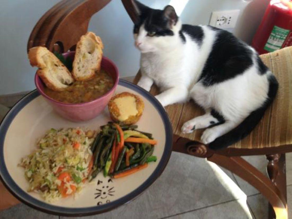 gatto-davanti-a-piatto-di-cibo