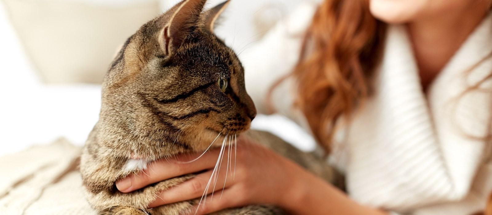 vivere-on-un-gatto