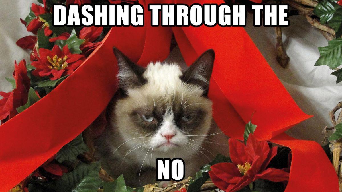 meme-su-gatto-imbronciato