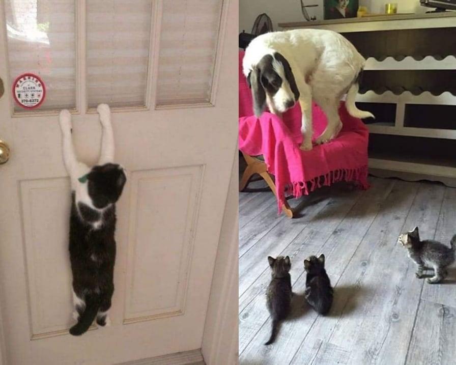 gatti simpatici