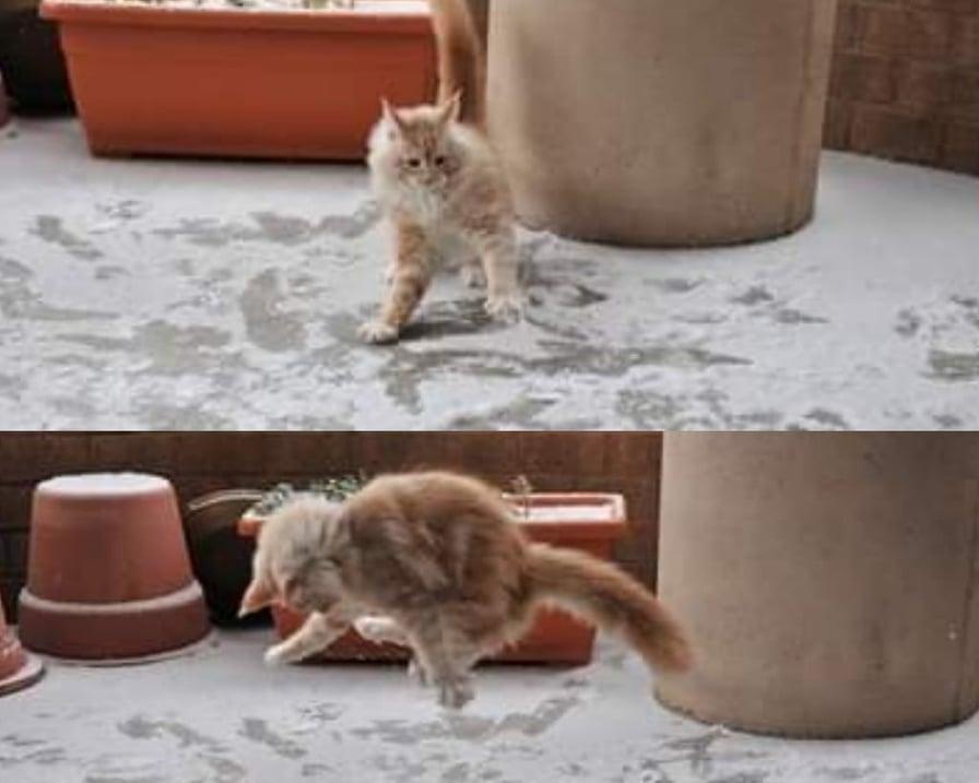 gatto-gioca-con-la-neve
