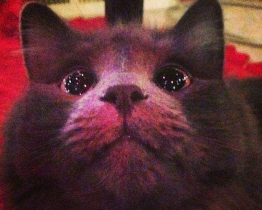 gatto-commosso