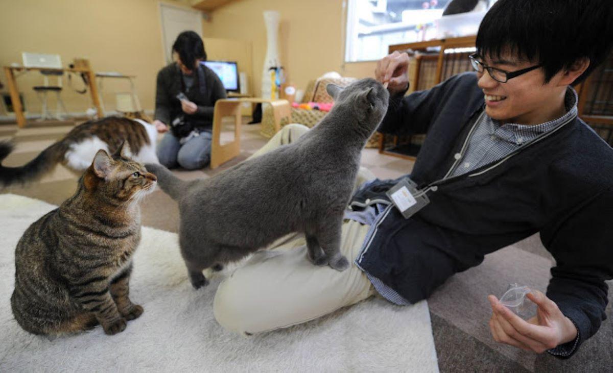 gatto-che-gioca-con-ragazzo