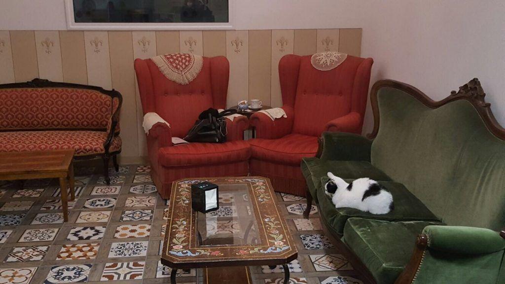 gatti-su-divano