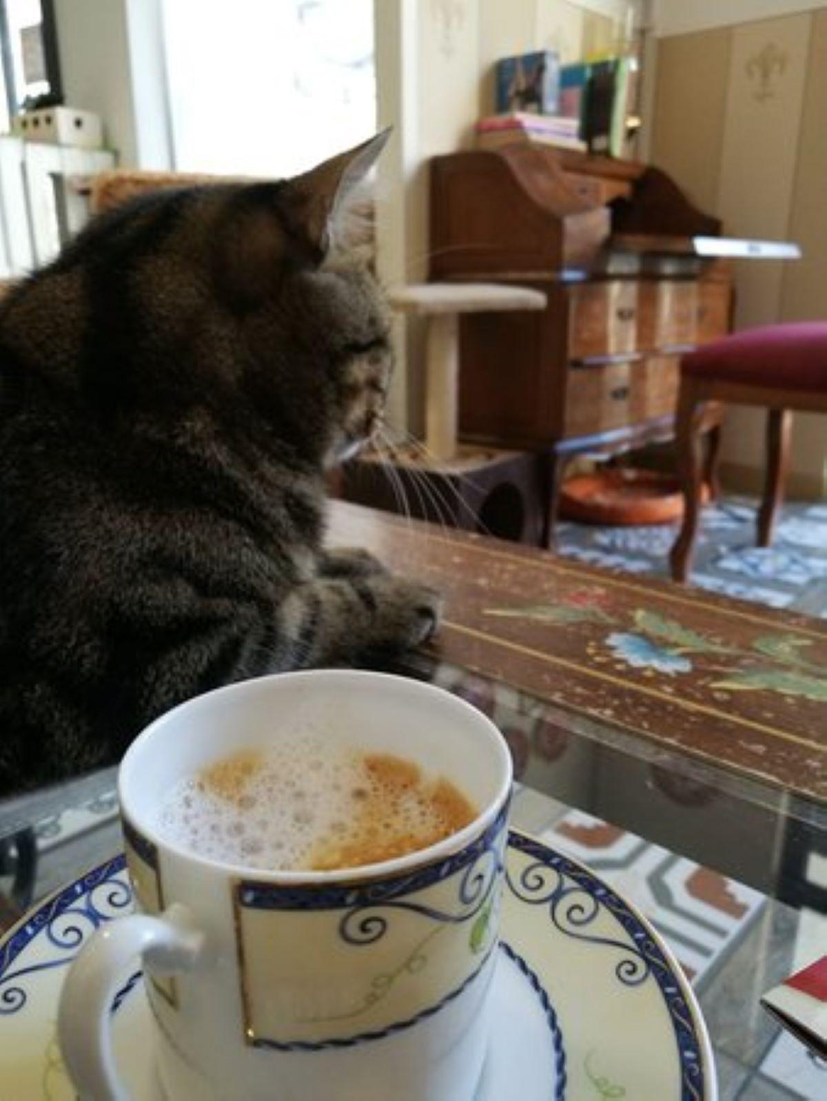 gatto-vicino-a-tazza-caffè