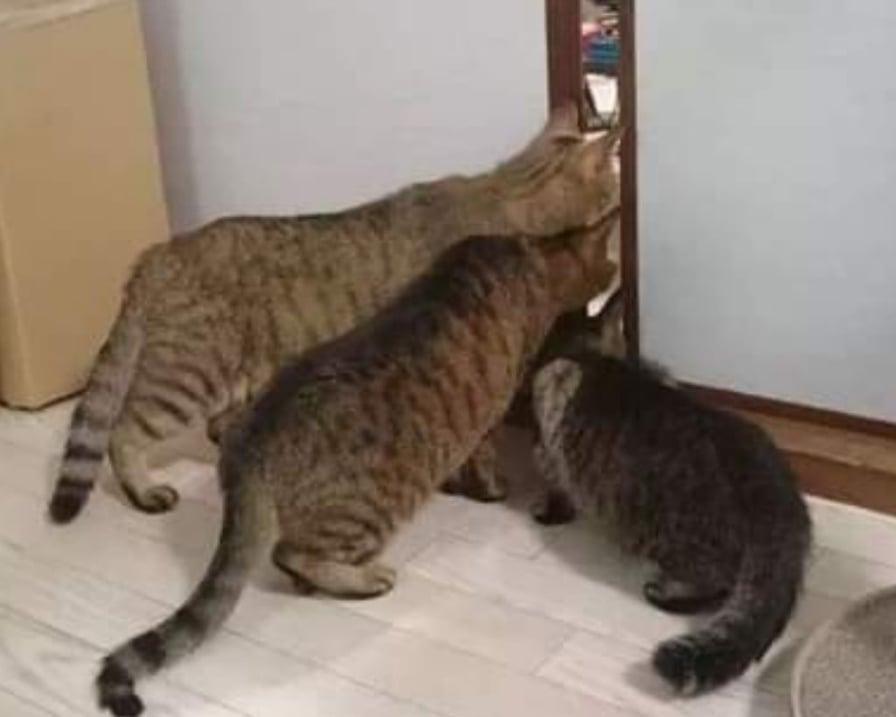 tre gatti curiosi