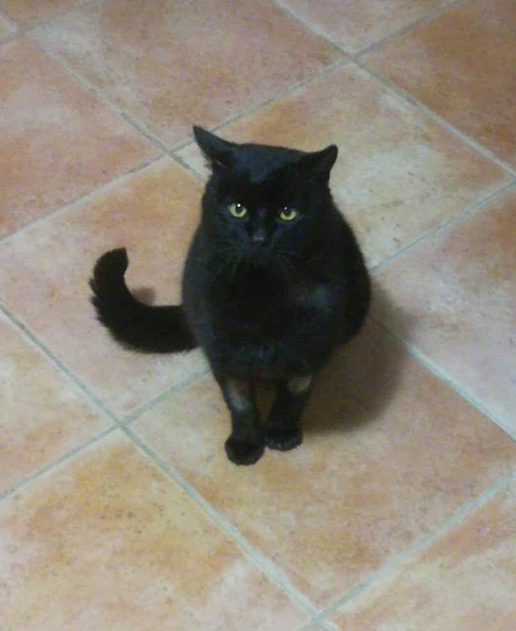 gatto-nero-su-pavimento