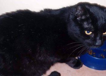 pedro-il-gatto-nero-che-nessuno-vuole-adottare