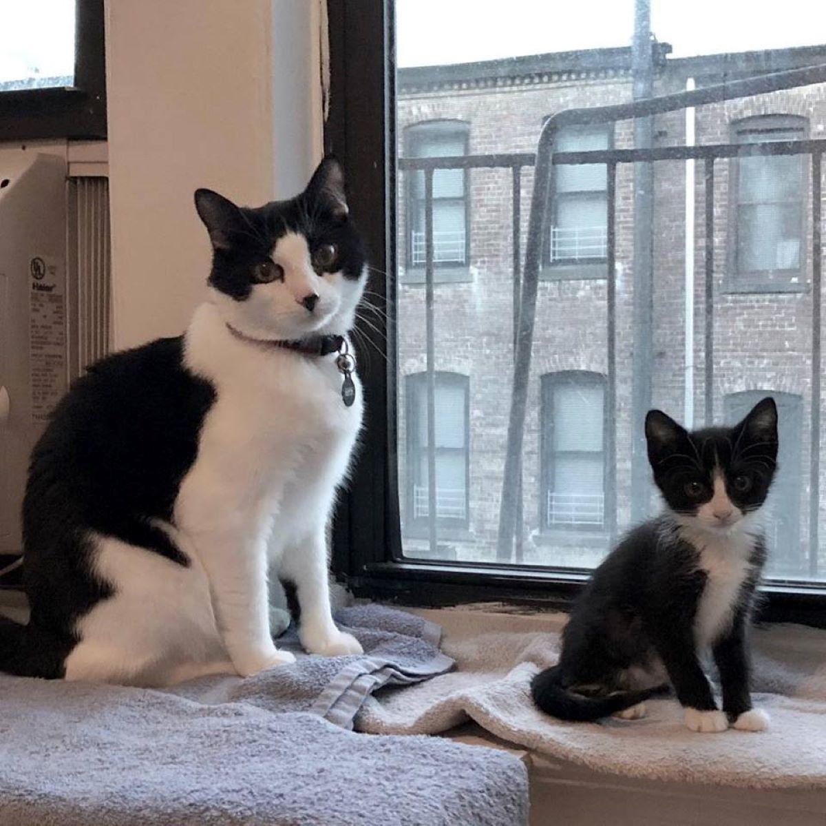 gattino-piccolo-e-gatto-grande