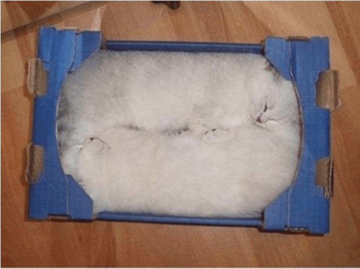 due-gatti-bianchi-in-una-scatola