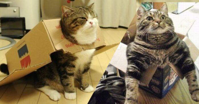 perchè-ai-gatti-piacciono-scatole