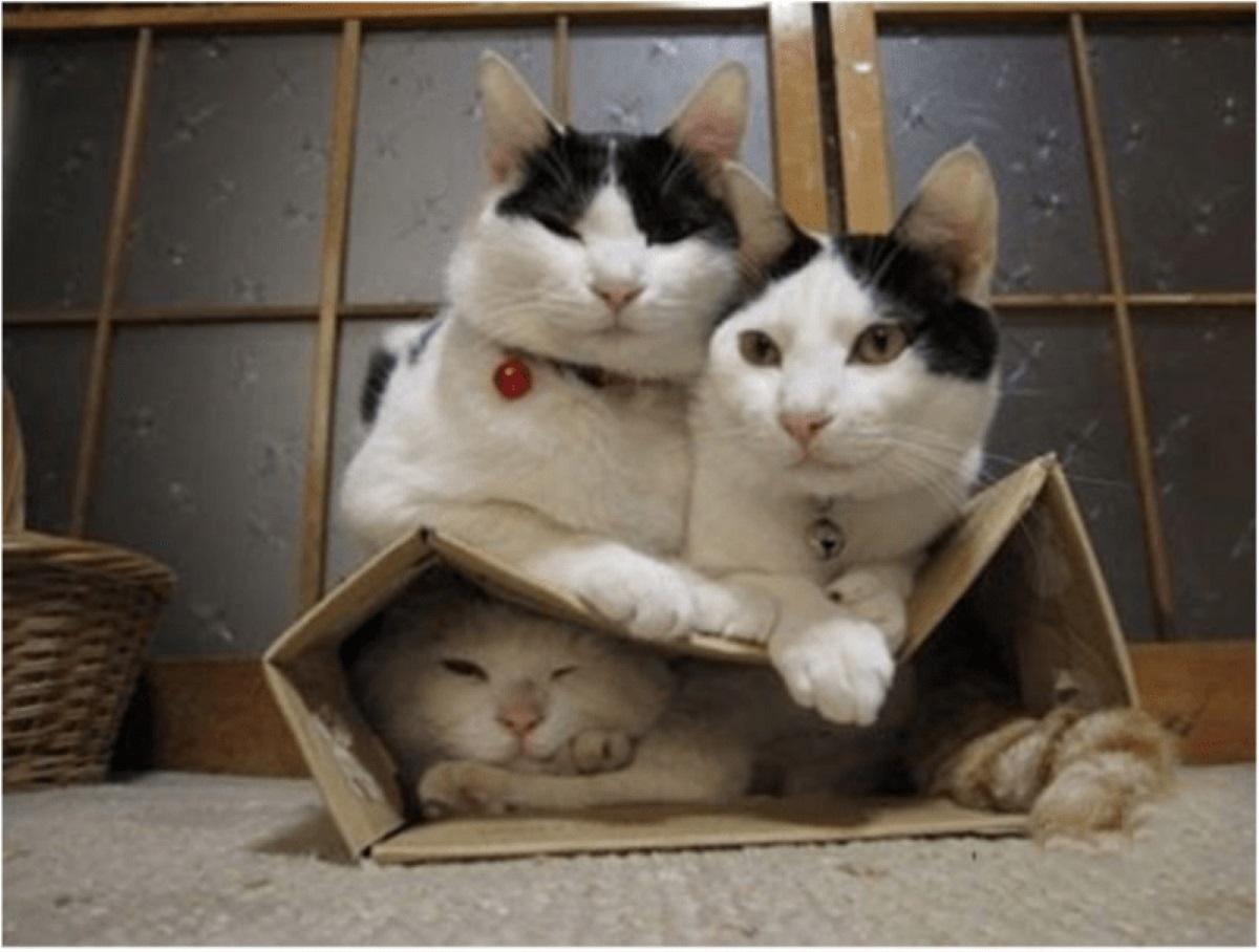 tre-gatti-con-scatola