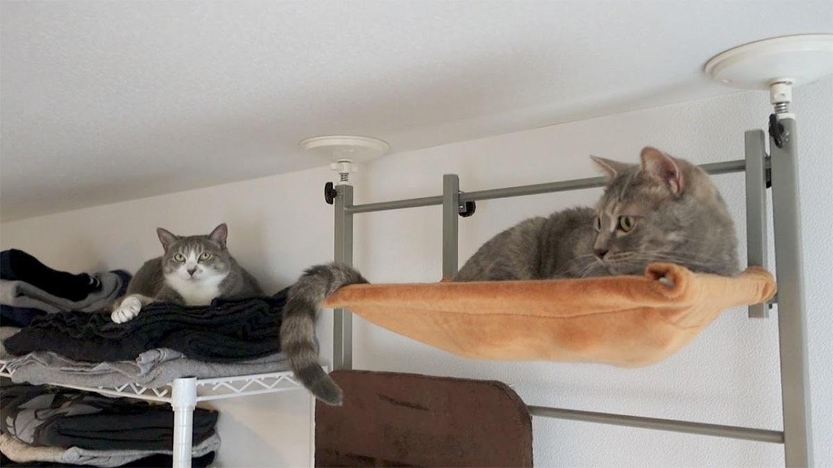 due gatti vicino al tetto