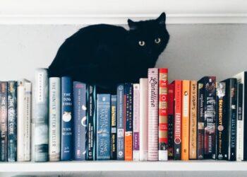 gatto nero su libreria