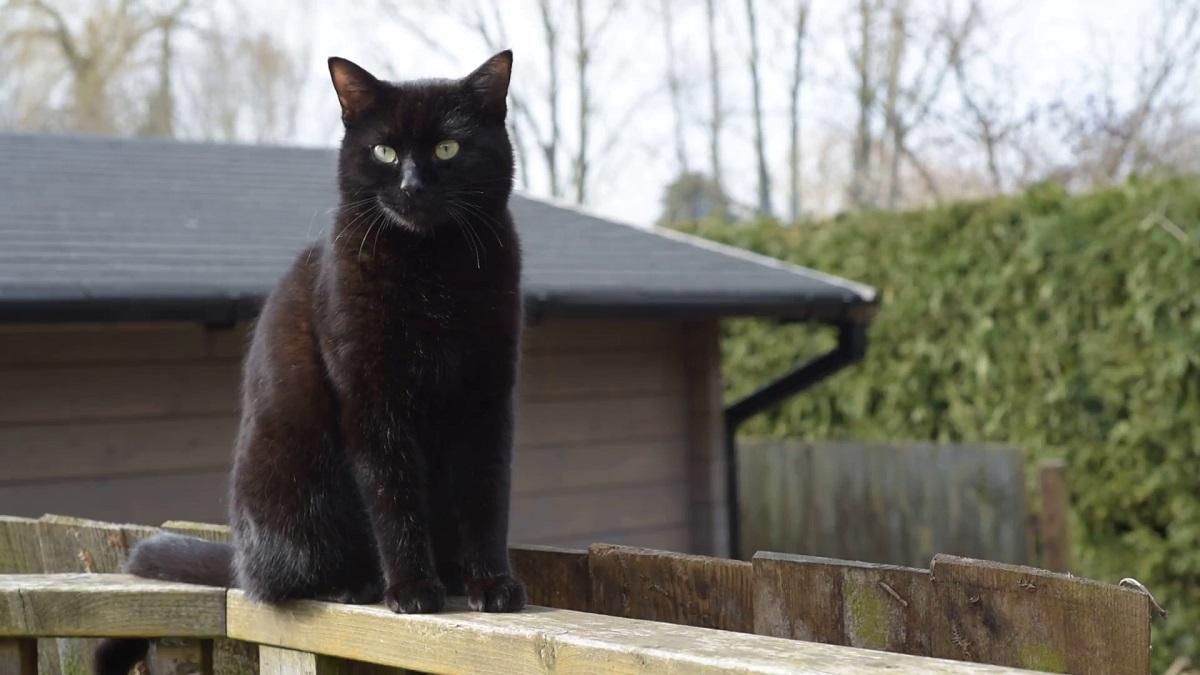 gatto su staccionata