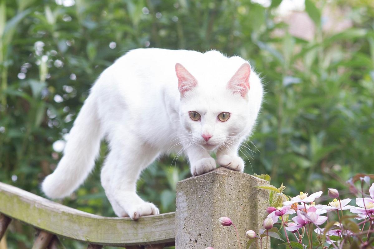 gatto bianco su staccionata