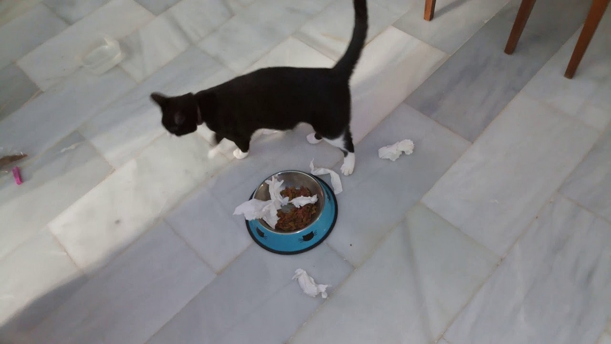 gatto copre il cibo nella ciotola