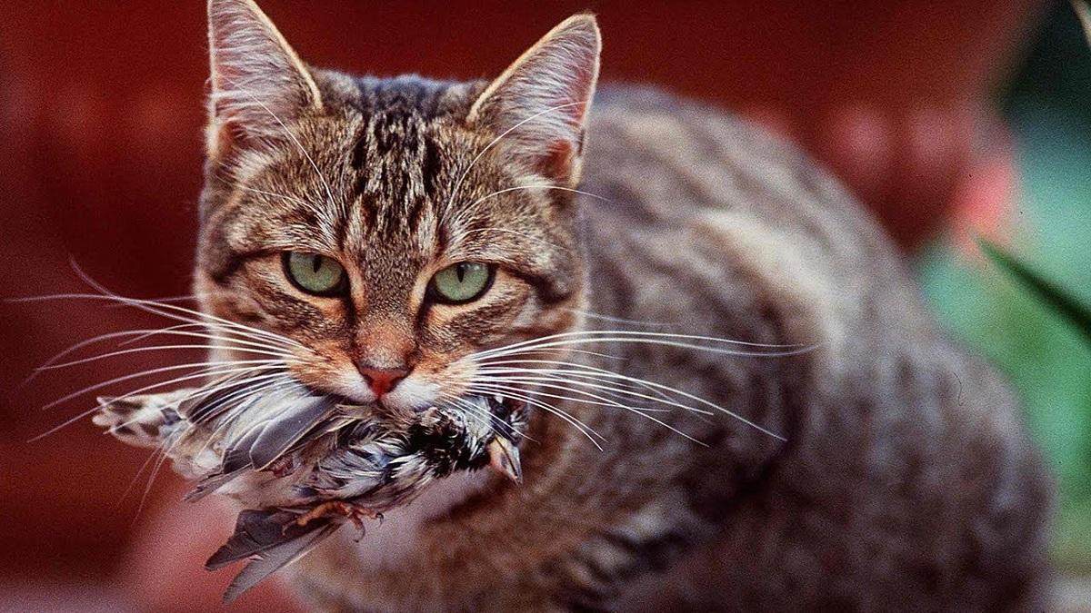 gatto con uccellino in bocca