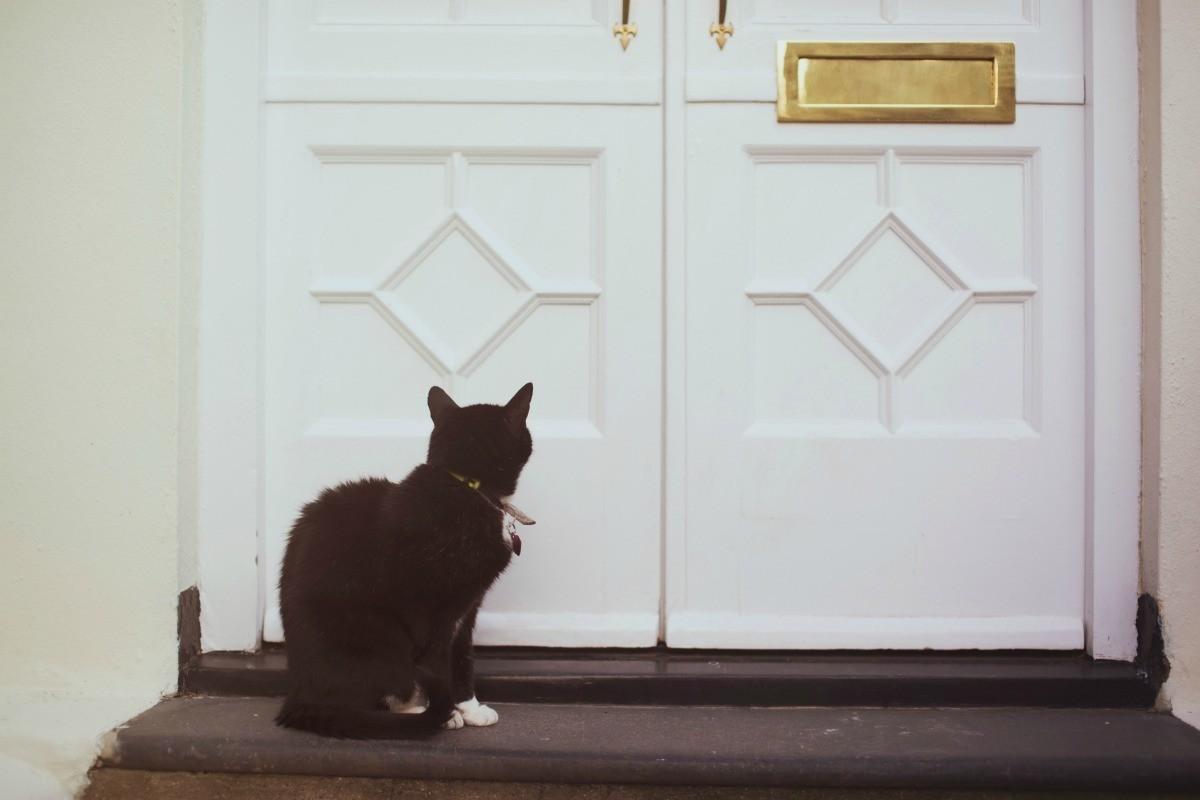 gatto dietro porta